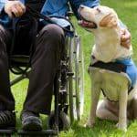 fondi pet therapy puglia